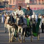 caléche à Marrakech