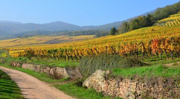 plantation vins