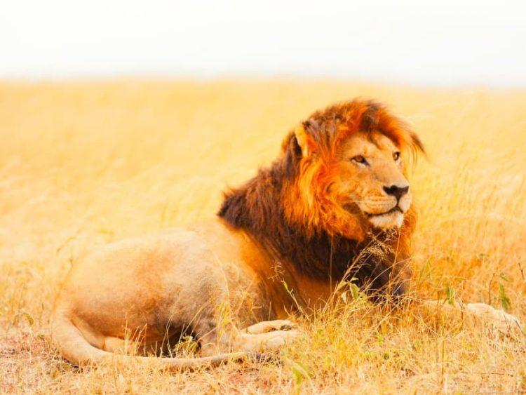 faune sauvage plages du kenya