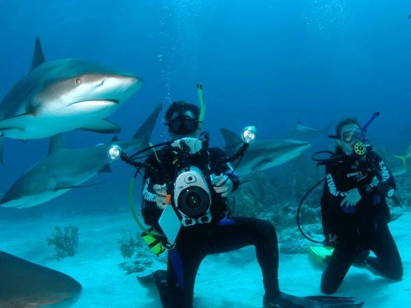 plongée Bahamas Viaprestige